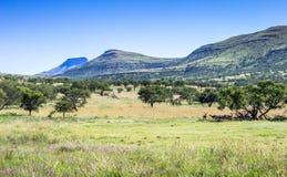 Paesaggio della riserva di caccia un giorno caldo nel Sudafrica Fotografie Stock Libere da Diritti