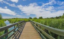 Paesaggio della riserva naturale concentrare delle zone umide di Londra Fotografia Stock