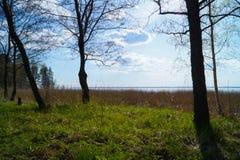 Paesaggio della riva con il lago Immagine Stock