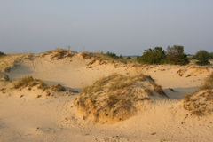 Paesaggio della sabbia di tramonto, deserto giallo, spiaggia con il pino ed erba Immagini Stock