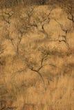 Paesaggio della savanna del terreno boscoso Fotografia Stock