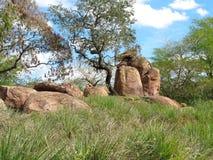 Paesaggio della savanna e la sua flora Immagini Stock