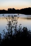 Paesaggio della siluetta di alba di fogliame sul lago ad alba di alba Fotografie Stock Libere da Diritti