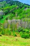 Paesaggio della sorgente Fotografia Stock Libera da Diritti
