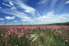 Paesaggio della sorgente. Fotografie Stock