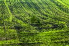 Paesaggio della sorgente Fotografie Stock