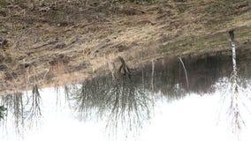 Paesaggio della sorgente Alberi ancora senza nuove foglie, l'erba dell'anno scorso La struttura gira 360 gradi stock footage