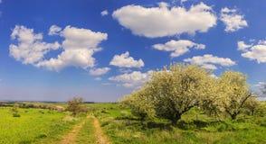 Paesaggio della sorgente Alta Murgia National Park: percorso con gli alberi in fioritura - (Puglia) l'ITALIA Fotografie Stock