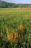 Paesaggio della sorgente, campo, baia di Cades Fotografie Stock