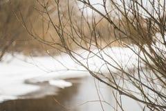 Paesaggio della sorgente Cespugli sui precedenti del fiume fotografie stock libere da diritti