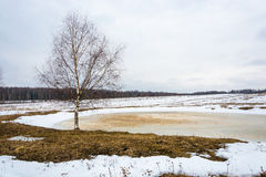 Paesaggio della sorgente con gli alberi di betulla Immagini Stock Libere da Diritti