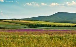 Paesaggio della sorgente con i fiori selvaggi Fotografia Stock