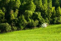 Paesaggio della sorgente e fiori della mela Fotografia Stock