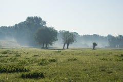 Paesaggio della sorgente in Polonia vicino al fiume di Vistula Fotografia Stock