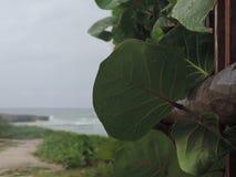Paesaggio della spiaggia Immagine Stock