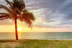 Paesaggio della spiaggia con la palma al tramonto Fotografia Stock