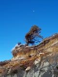Paesaggio della spiaggia dell'Oregon Immagini Stock Libere da Diritti