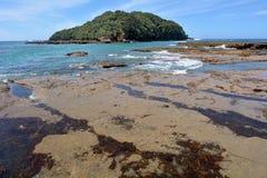 Paesaggio della spiaggia Nuova Zelanda dell'isola della capra Fotografia Stock
