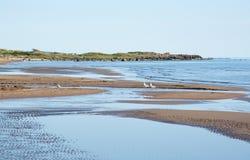 Paesaggio della spiaggia sabbiosa Immagine Stock
