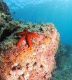Paesaggio della stella di mare Immagine Stock Libera da Diritti