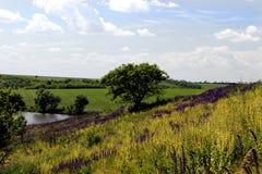 Paesaggio della steppa Immagine Stock