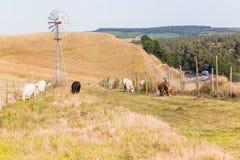 Paesaggio della strada principale della strada degli animali da allevamento Immagine Stock