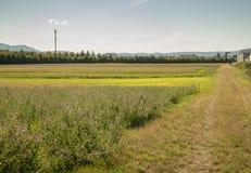 Paesaggio della terra del raccolto Fotografie Stock