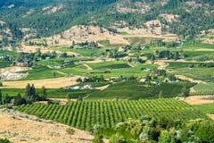 Paesaggio della terra delle aziende agricole il giorno di estate in valle di Okanagan fotografia stock libera da diritti