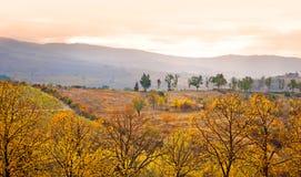 Paesaggio della Toscana di autunno, vigna in Chianti alla s Immagine Stock Libera da Diritti