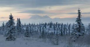 Paesaggio della tundra della montagna con il Mt Denali Fotografie Stock Libere da Diritti