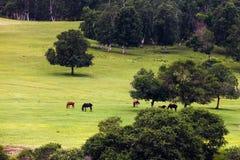Paesaggio della valle Immagini Stock Libere da Diritti