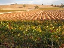 Paesaggio della valle del vino di Barossa immagine stock