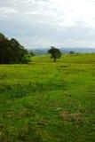 Paesaggio della valle della montagna, Australia Immagini Stock Libere da Diritti