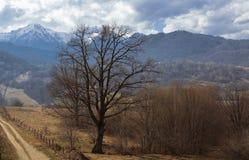 Paesaggio della valle di Cheile Gradistei fotografia stock