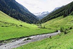 Paesaggio della valle di Zillertal in Tirolo Alpi europee Austria dentro Fotografie Stock