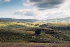 Paesaggio della valle verde della montagna Fotografia Stock Libera da Diritti