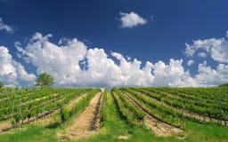 Paesaggio della vigna con le bei nuvole e cielo blu di estate Fotografie Stock