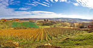 Paesaggio della vigna di Bilogora in Croazia Fotografie Stock