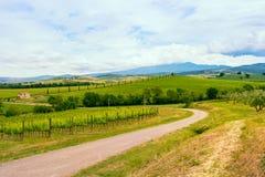 Paesaggio della vigna di Chianti in Toscana Fotografia Stock Libera da Diritti