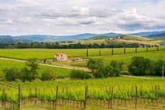 Paesaggio della vigna di Chianti in Toscana Immagini Stock Libere da Diritti