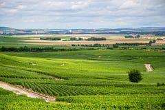 Paesaggio della vigna, Montagne de Reims, Francia Immagini Stock Libere da Diritti