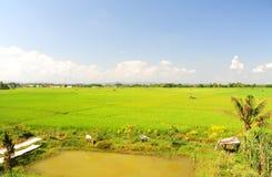 Paesaggio della vista della risaia Fotografia Stock Libera da Diritti
