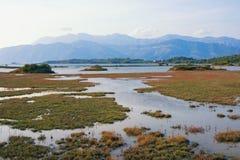 Paesaggio della zona umida, palude d'acqua salata Vista della riserva naturale speciale Solila Teodo, Montenegro immagine stock libera da diritti