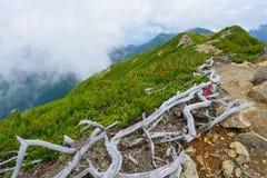 Paesaggio delle alpi del sud del Giappone Immagine Stock Libera da Diritti