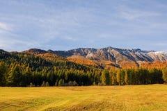 Paesaggio delle alpi e della foresta svizzere del parco nazionale in Svizzera Alpi della Svizzera sull'autunno Parc Naziunal Sviz Immagini Stock