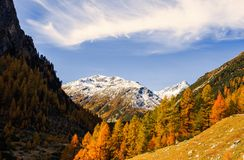 Paesaggio delle alpi e della foresta svizzere del parco nazionale in Svizzera Alpi della Svizzera sull'autunno Parc Naziunal Sviz Immagini Stock Libere da Diritti