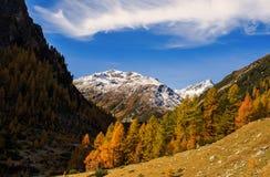Paesaggio delle alpi e della foresta svizzere del parco nazionale in Svizzera Alpi della Svizzera sull'autunno Parc Naziunal Sviz Immagine Stock Libera da Diritti