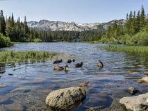Paesaggio delle anatre che nuotano in un lago all'area mastodontica dei laghi in vista dei mountiains Immagini Stock Libere da Diritti