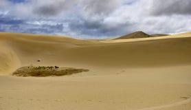 Paesaggio delle dune di sabbia di Te Paki del gigante Fotografie Stock Libere da Diritti