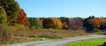 Paesaggio delle foglie di autunno di caduta Immagini Stock Libere da Diritti